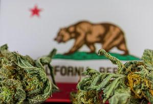california hemp cannabis marketing billboard blog